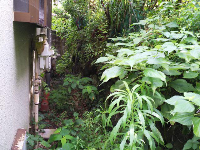 お庭の手入れ その1 施工前の様子
