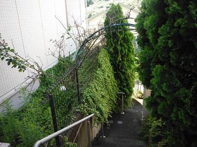 お庭の手入れ その4 施工前の様子