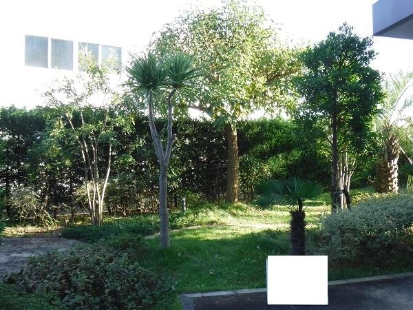 マンション緑地年間管理 その3 施工前の様子