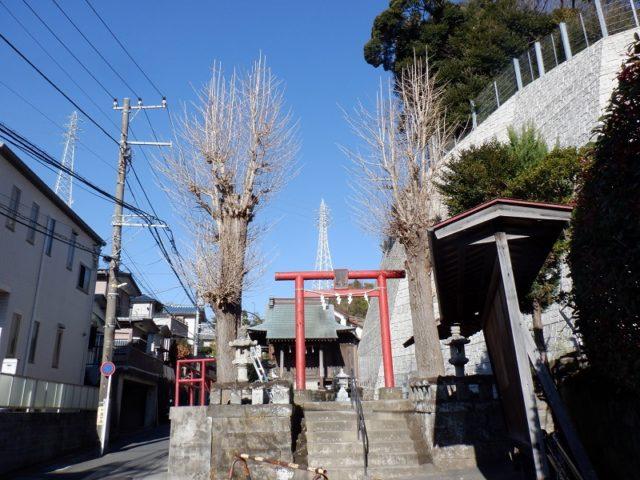 神社のイチョウ剪定 施工前の様子